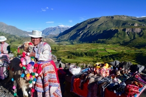 Colca Canyon in background with llama and local