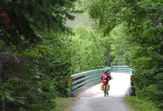 Cyclist going down path surrounded by lush trees
